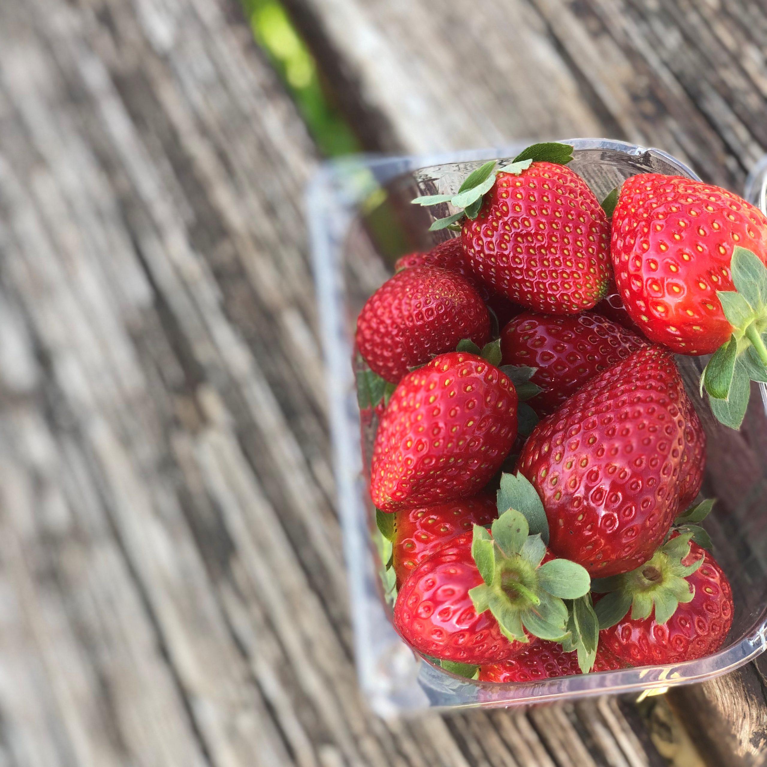 קטיף תותים משק שש